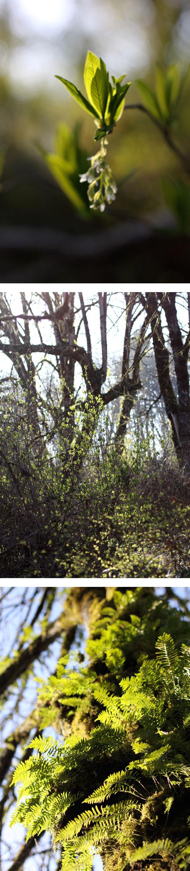 Brightforest