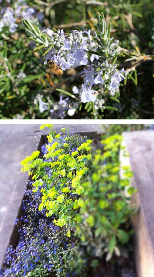 Beeeuphorbia