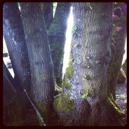 Boyintrees