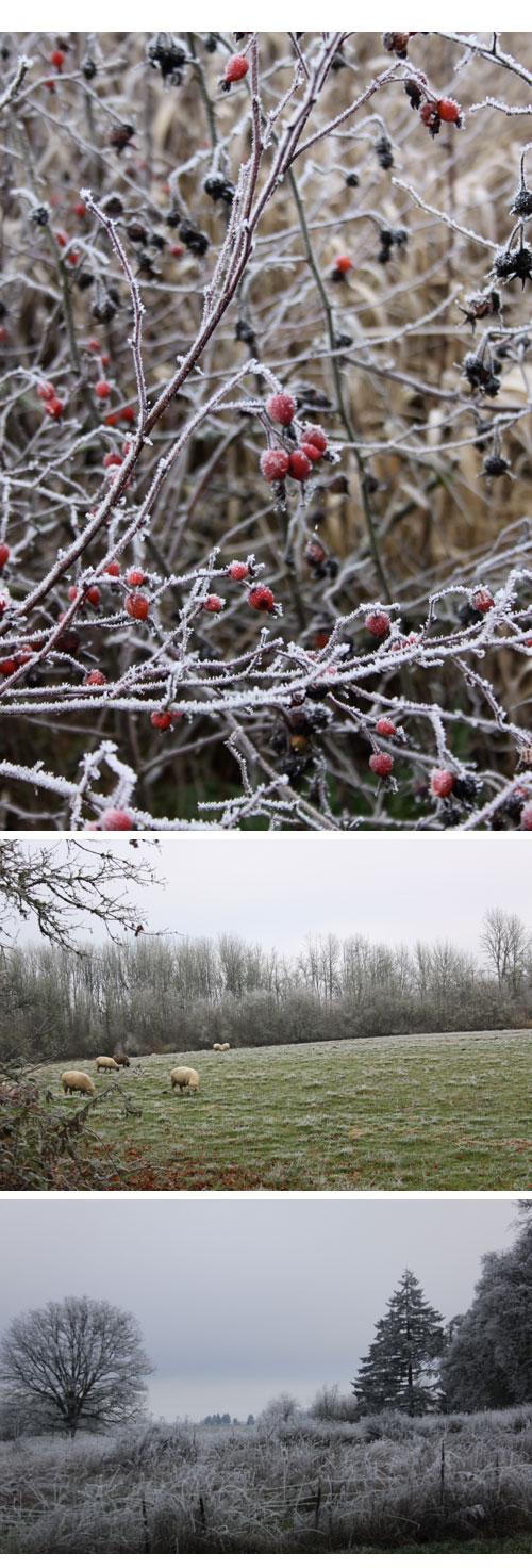 Frost&fog-sheep