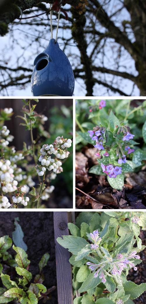 Gardenblues