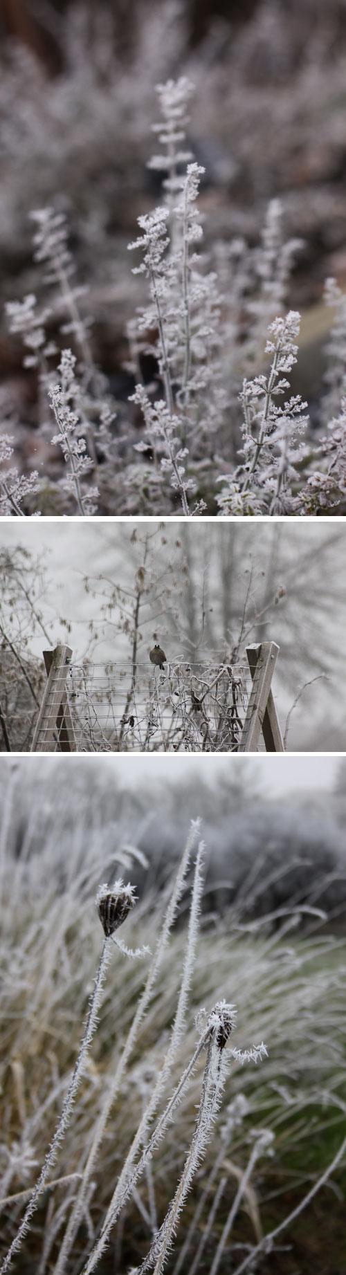 Frost&fog-sparrow