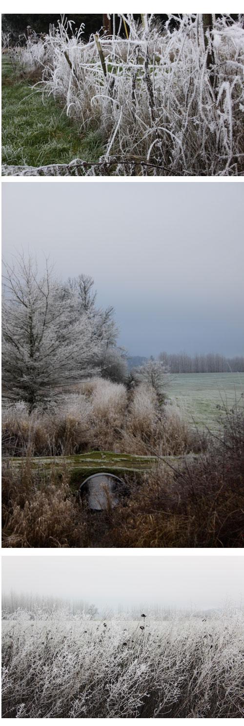 Frost&fog-fields
