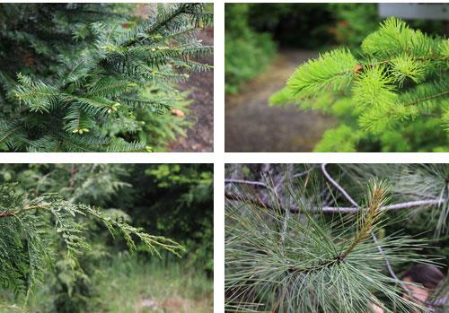 Treeids